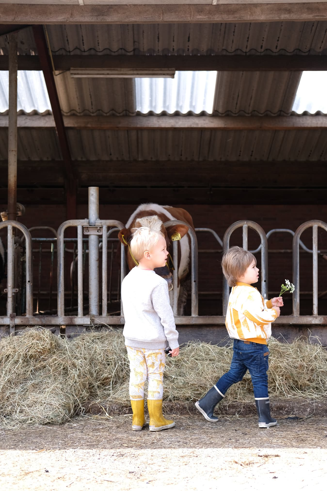 bij de biologische veehouder