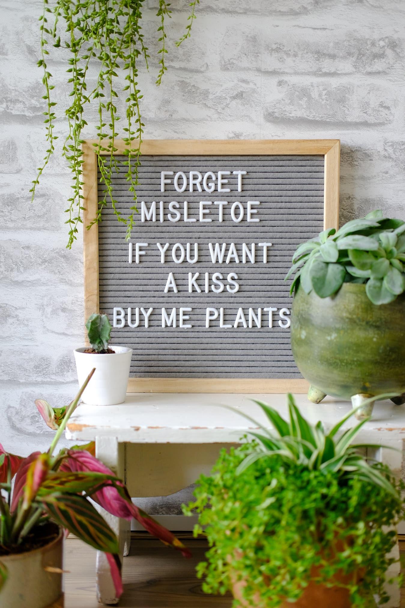 grappige planten quotes