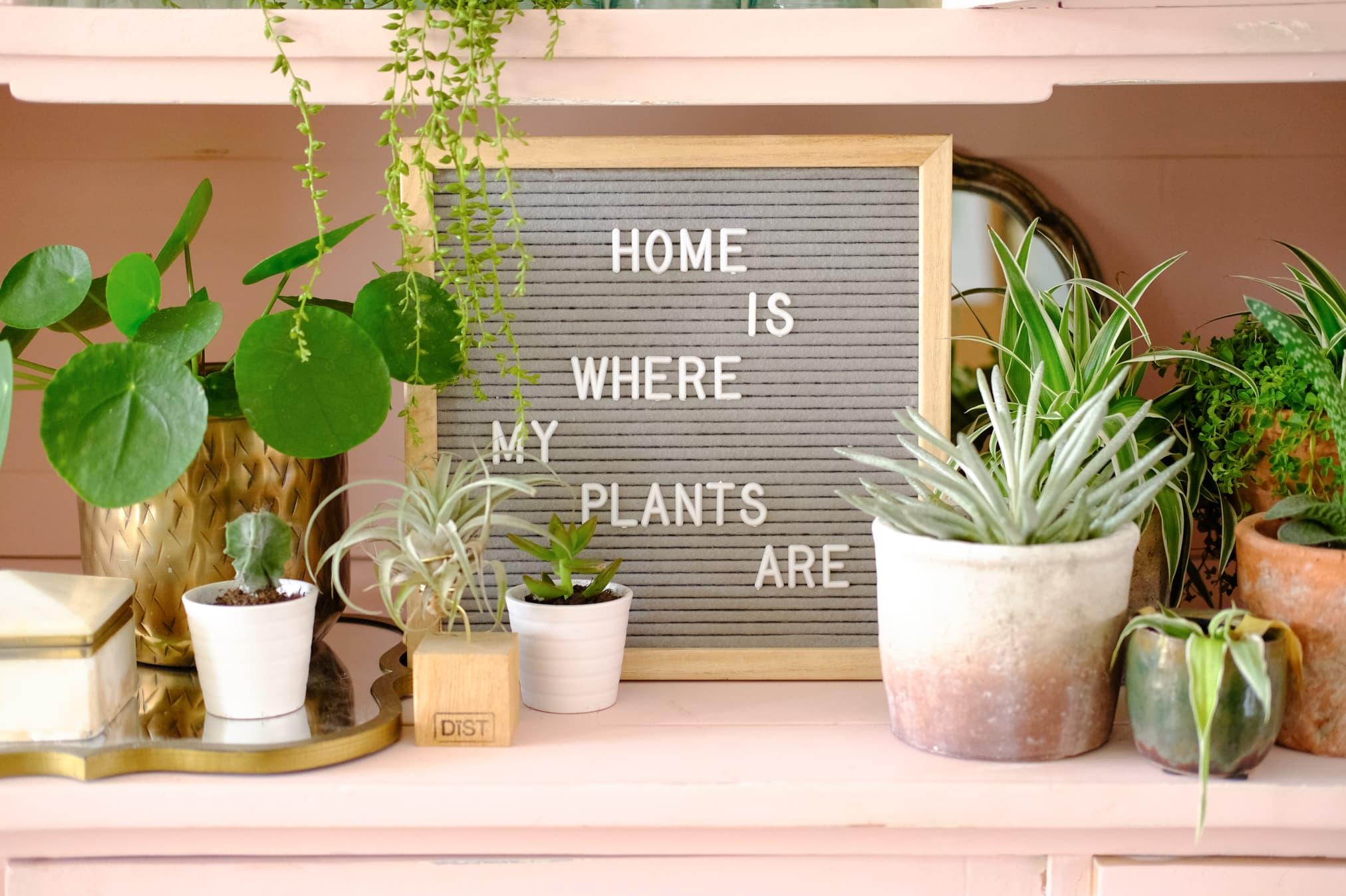 gekke planten teksten letterbord