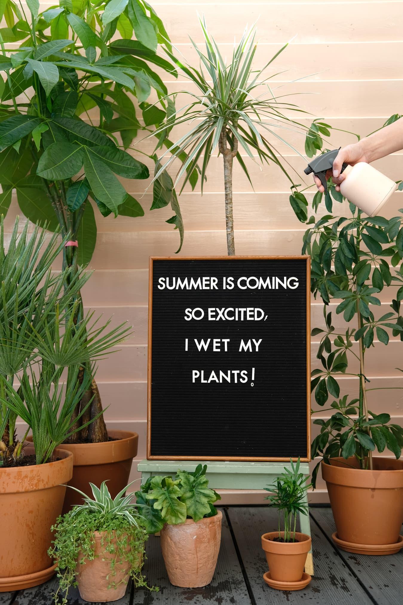quotes planten grappig