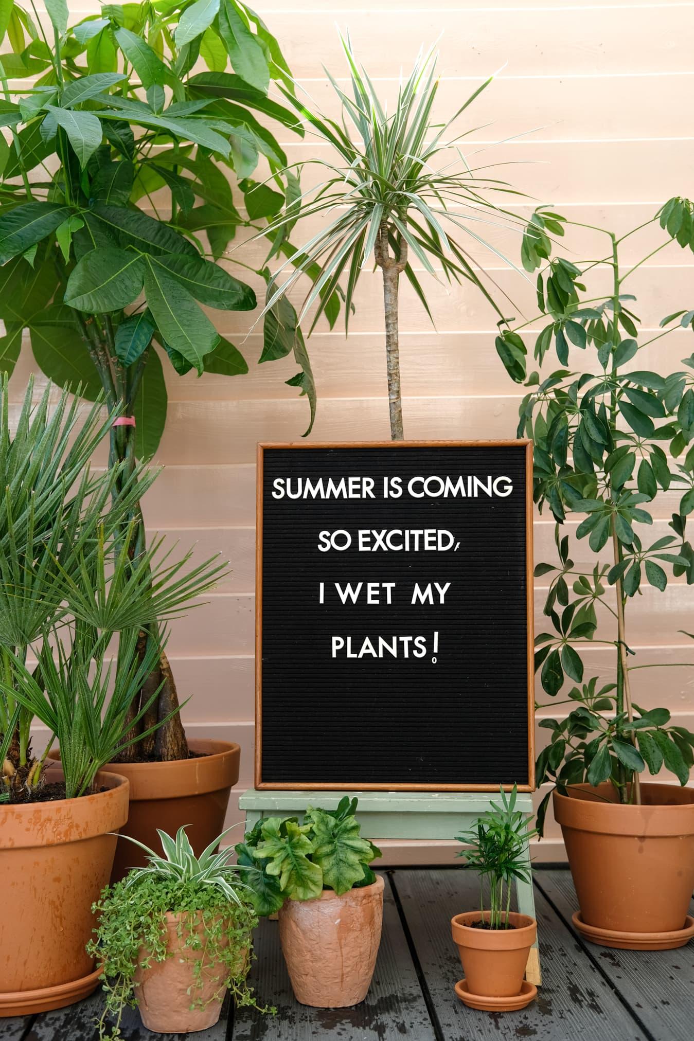 zomer quote planten