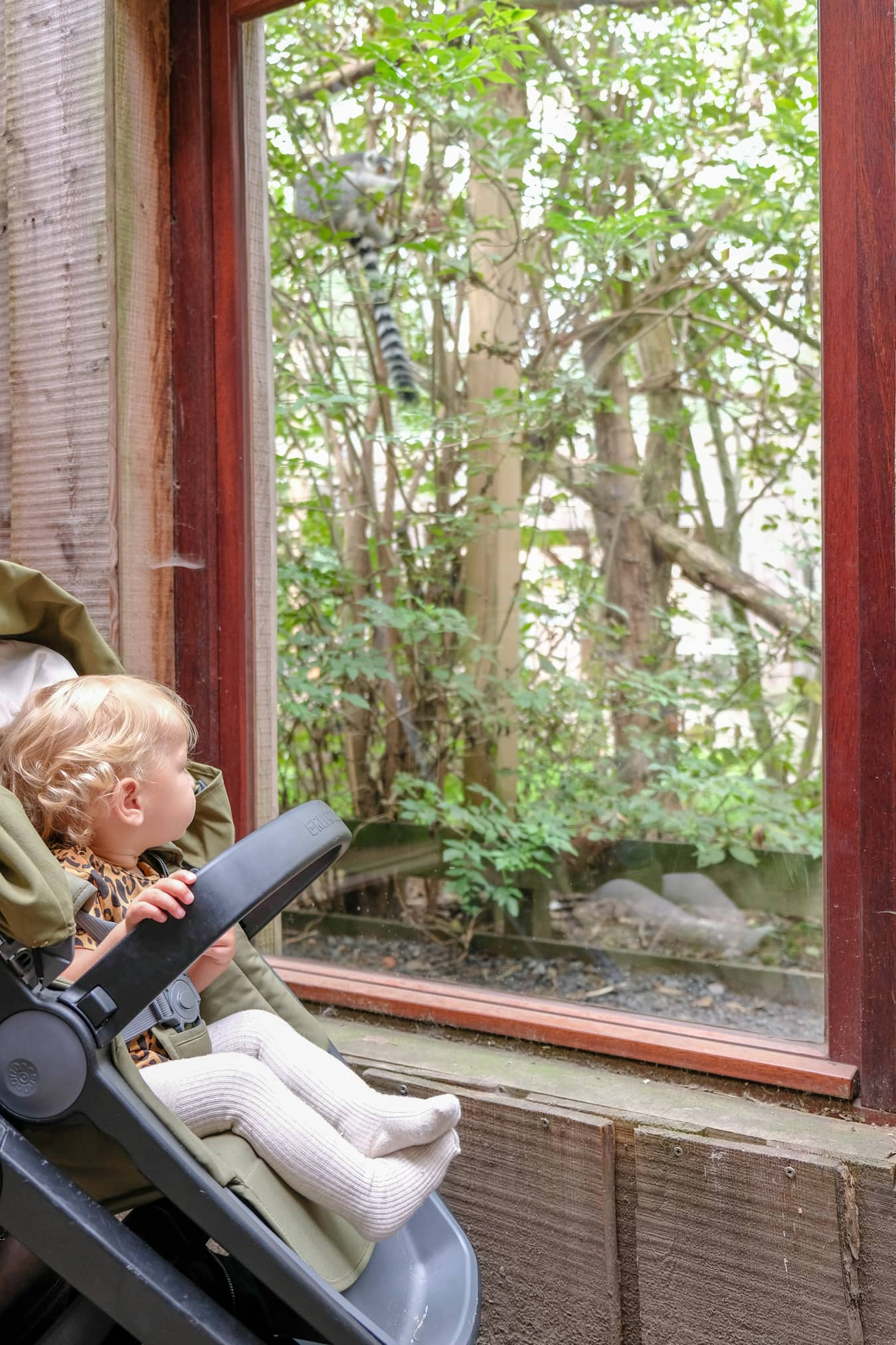 dierentuin vlakbij de panne