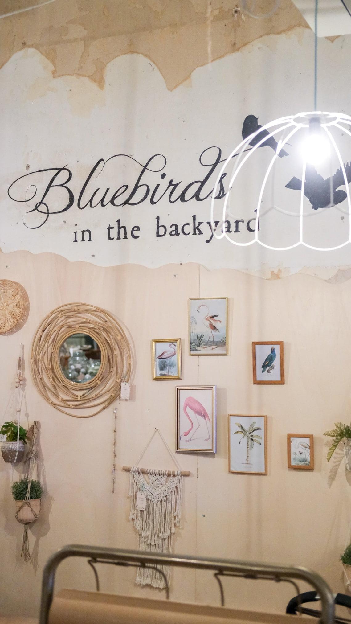 bluebirds in the backyard dordrecht