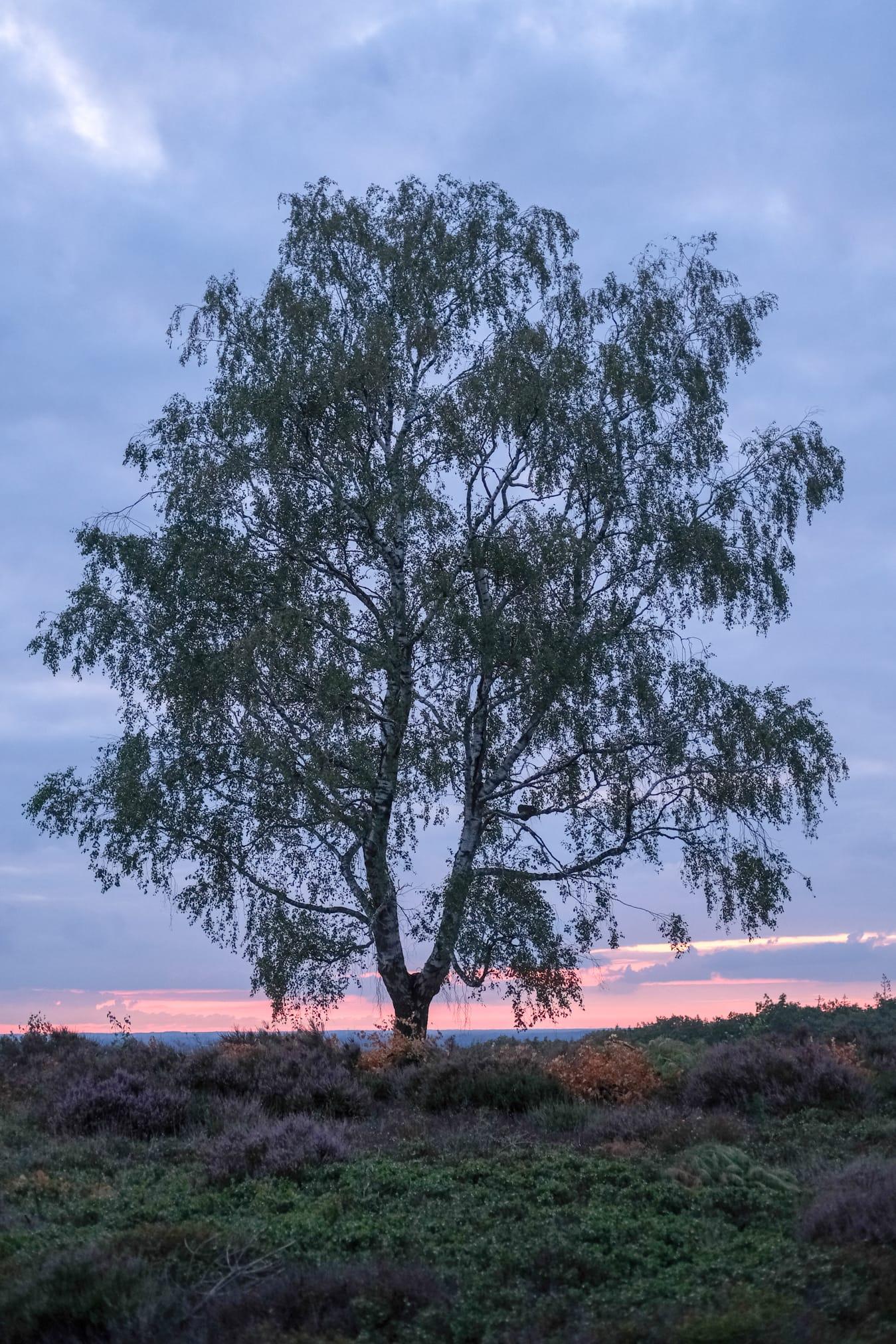 schemerwandeling staatsbosbeheer sallandse heuvelrug