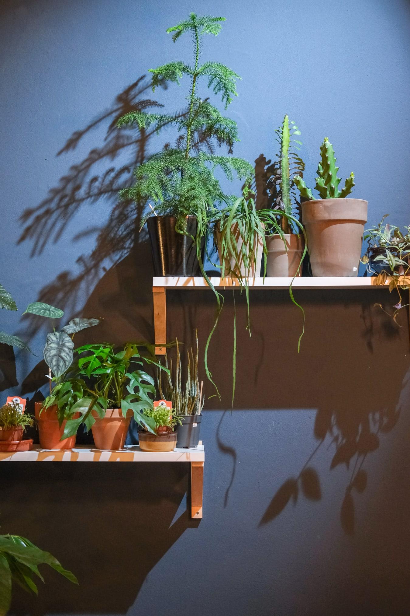 plantenwinkel maastricht