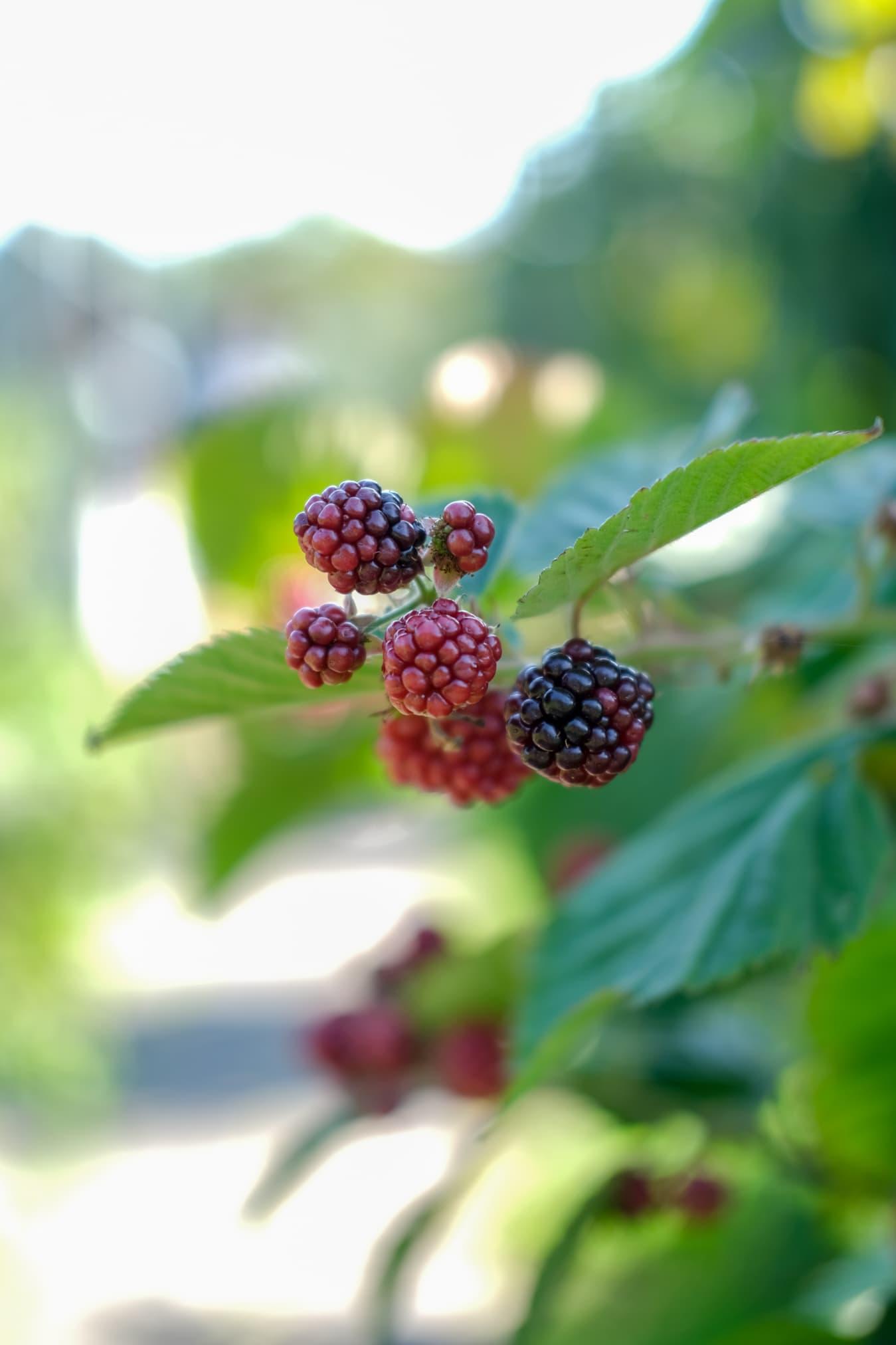 fruit plukken zomervakantie