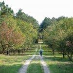 de mooiste herfstwandelingen maken in noord holland