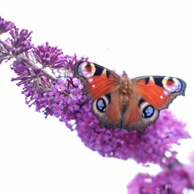 tips meer biodiversiteit in de tuin